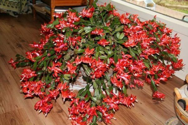 Название и фото красивоцветущих цветов