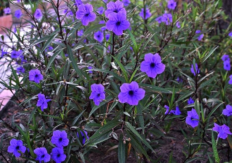 Комнатное растение с белыми цветками от гардении до