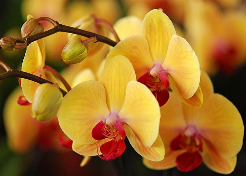 можно ли орхидею в спальню