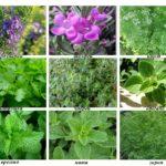 8 полезных трав для выращивания в домашних условиях
