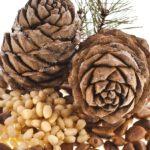 Чем полезны кедровые орешки для организма
