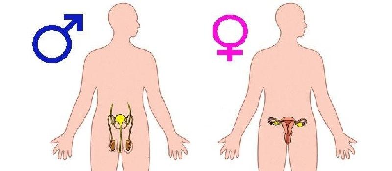 полезные свойства цинка для организма человека