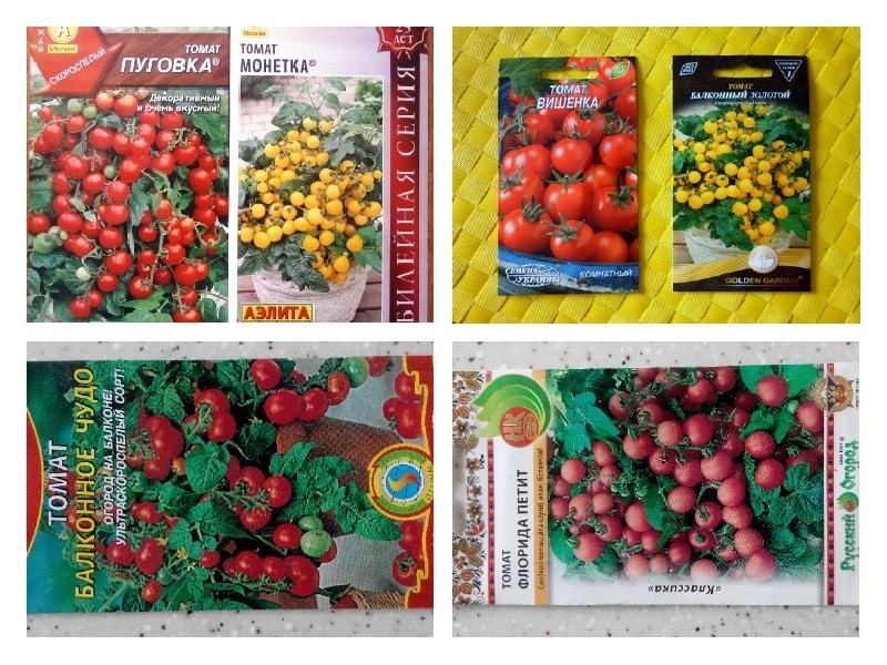томат балконное чудо выращивание на подоконнике