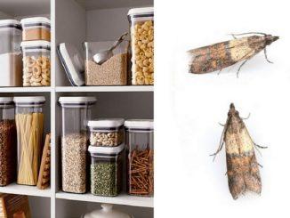как бороться с пищевой молью на кухне