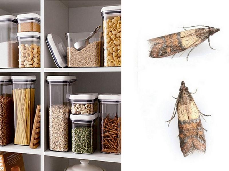 Моль на кухне – комплексные шаги по борьбе с вредителем