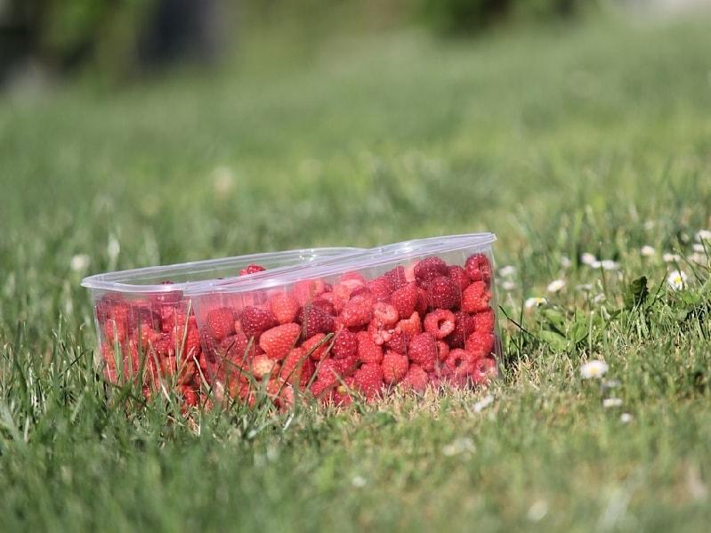 контейнеры для заморозки ягод