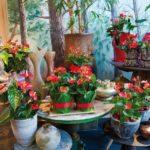 Комнатные цветы антуриум: уход в домашних условиях