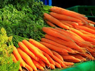 морковь польза и вред для здоровья