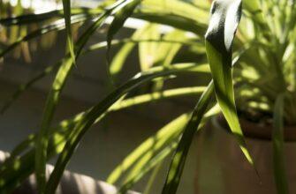 теневыносливые комнатные растения (названия и фото)