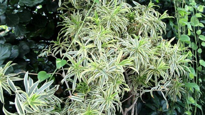 неприхотливые комнатные растения фото и название